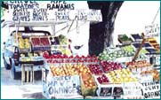 Fruit Stand by Sylvia Corban